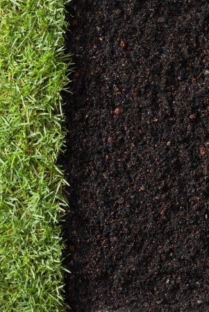green grass with soil as nature background Stock Photo - 19286075