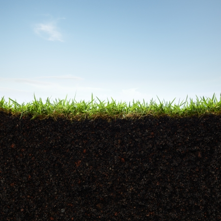 cross section: cross section of grass and soil against blue sky