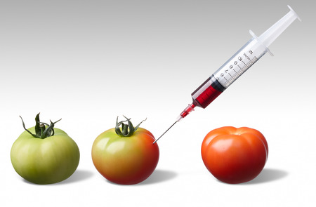 forcing: injecting unripe tomato forcing it to ripe faster Stock Photo