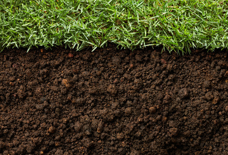 green grass with soil as nature background Stock Photo