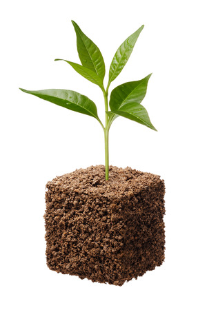 cube shape soil with plant isolated on white