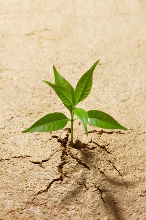 breaking out: peque�a planta de romper de suelo agrietado Foto de archivo