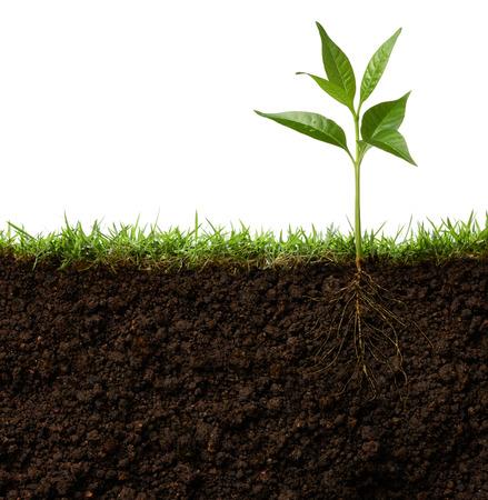 그것의 뿌리를 가진 식물의 단면도
