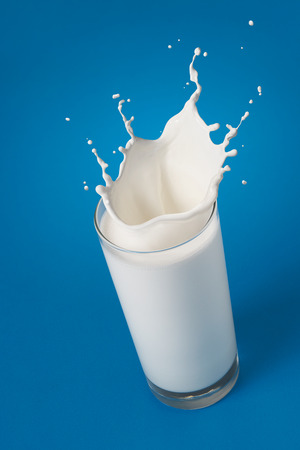 glass of splashing milk isolated on blue background photo