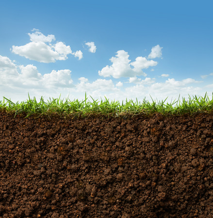 cross section of grass and soil against blue sky