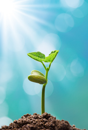 the nature of sunlight: sprout with sunlight shining on it Stock Photo