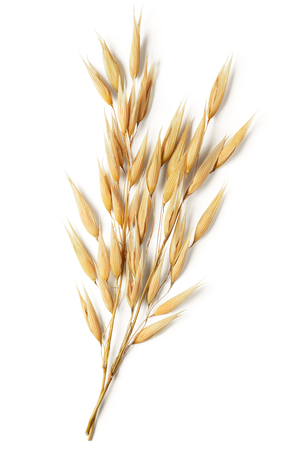 oat plant isolated on white background Stock Photo