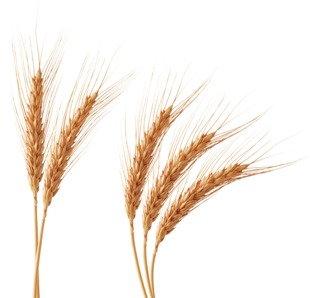 group of wheat ears isolated on white