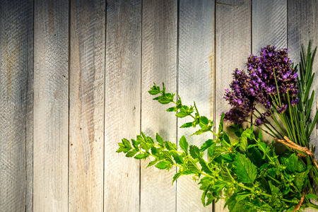 on herb: Fresh herbs on a wooden table