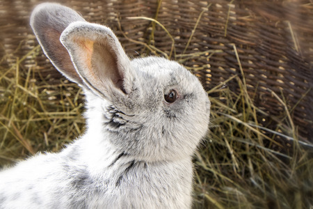 Portrait of a beautiful rabbit