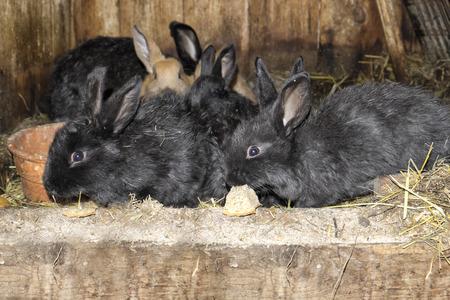 Rabbits in hutch