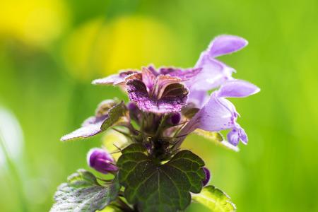 Purple flower on a meadow Reklamní fotografie