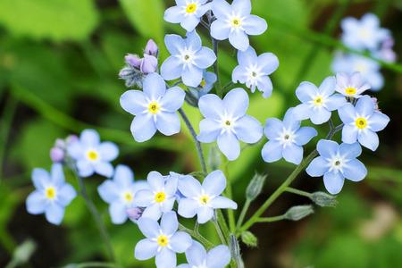 Blue flowers on a spring meadow Reklamní fotografie