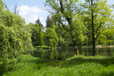Beautiful trees and a pond in the park