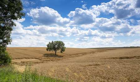 Landscape with wheat field and beautiful clouds
