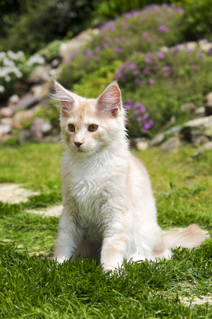 Little kitty sitting in the garden