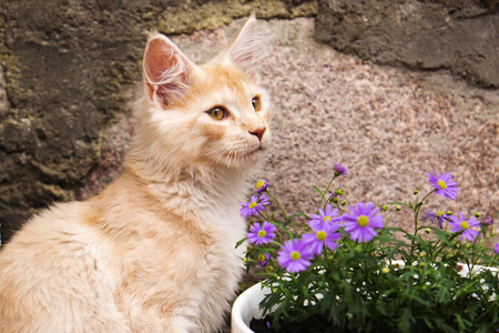 Close up photo of little kitty and flowers