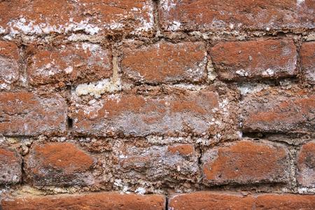 Background of the brick wall Reklamní fotografie