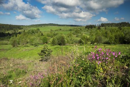 Rural landscape in Czech Republic