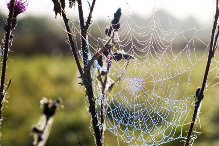 Morning meadow with cobweb covered with dew drops Reklamní fotografie
