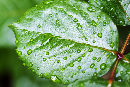 Close up of a green leaf with dew drops
