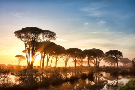 Strophylia forest in Kalogria at sunrise in Greece Stock Photo - 5963218
