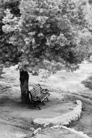 Lonely bench under a tree in black and white photo