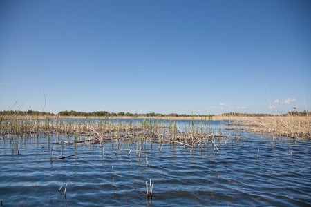 biosphere: Beautiful landscape from the Danube Delta Biosphere Reserve in Romania