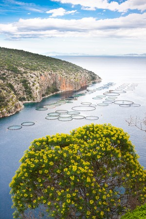 fisheries: Landscape of fisheries in a bay along the Greek coast. Stock Photo