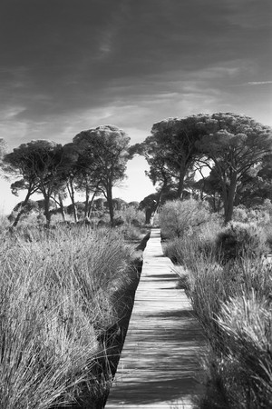 Black and white landscape at Strophylia wetland in Greece. photo