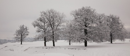 wintry landscape: Beautiful panoramic landscape in winter of oaks covered with snow in the countryside, Romania.