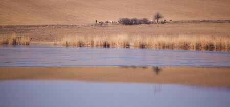 shephard: Spring landscape of shephard and sheep at Horia lake, in Dobrogea region of Romania.