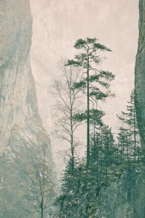One specimen of Pinus sylvestris (Scots Pine) stranded on a rock in Bicaz Gorges, Romania. Stock Photo - 11873040