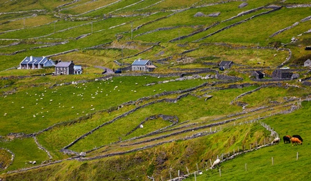 Details of the always green irish landscape at Dingle Peninsula, County Kerry, Ireland. photo