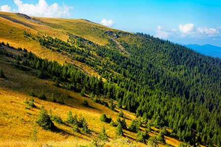 Summer landscape at high altitude in Tarcu Mountains, Romania Stock Photo - 12953909