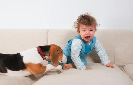 ojos llorando: 1 a�o de edad beb� llorando porque su mascota quiere jugar. Foto de archivo