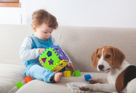 one dog: Baby boy playing with toys next to his beagle pet dog.
