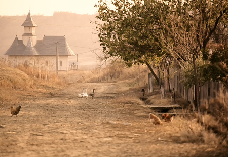fall landscape: Geese on the village road leading to the church in Stanca village, Iasi, Romania. Stock Photo