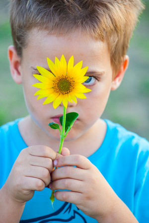 5 year old: Portrait of a 5 year old boy hiding behind sunflower.