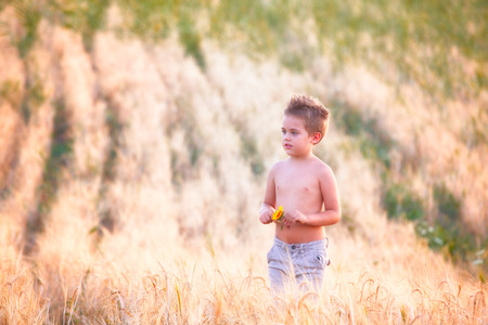 5 year old: Portrait of a 5 year old boy outdoor in a wheat field. Stock Photo