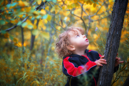 toddler boy: Portrait of 1 year old baby boy taking a walk in the woods in the fall. Stock Photo