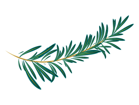 Vector illustration of green rosemary branch isolated on white