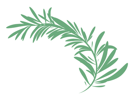 Vector illustration of green rosemary branch isolated on white background Ilustração