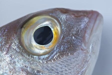 sea bream: Eye of red sea bream Stock Photo