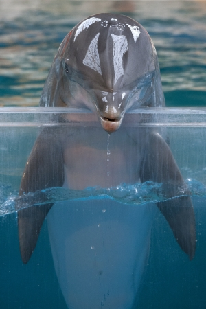 Dolphin portrait Stock Photo