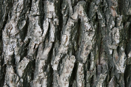 Bark tree photo