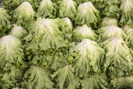 lettuces: Macro view of fresh lettuces