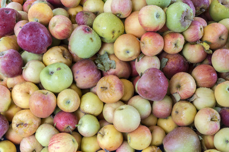 Macro view of organic apples in local market of Ezine town in Canakkale, Turkey. Stock Photo