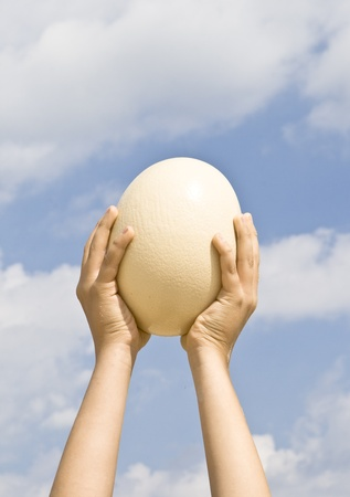 upraised: The egg of an ostrich in upraised hands on the background of blue sky.