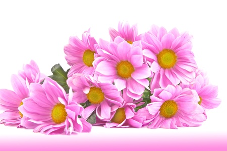 Postcard with a bouquet of purple chrysanthemums on a white background